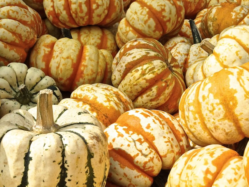 pumpkin-gourd-decoration-structure-51344.jpg